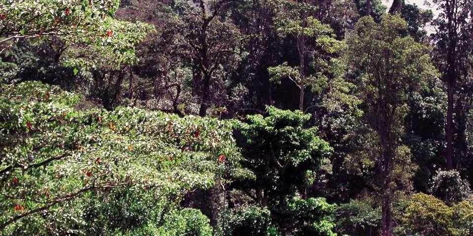 Montaña del Kilambe