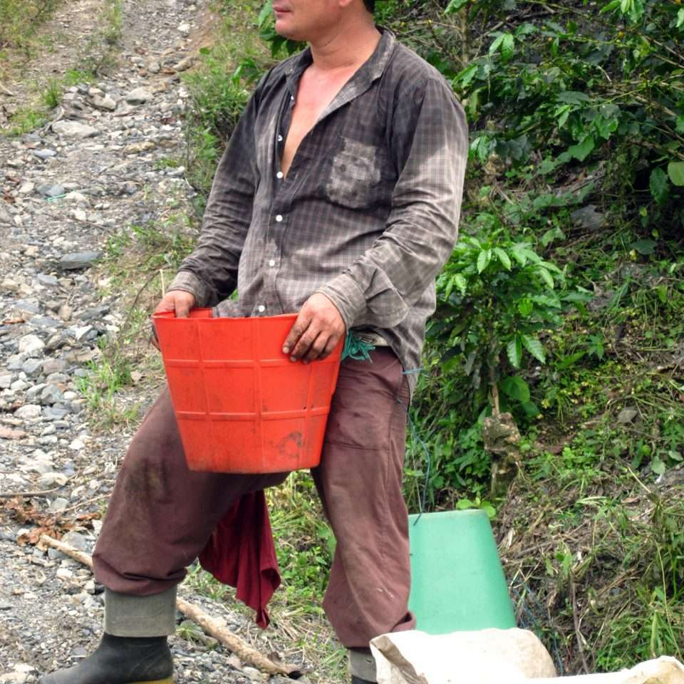 Green coffee farmer