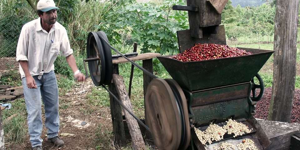 Green coffee mill