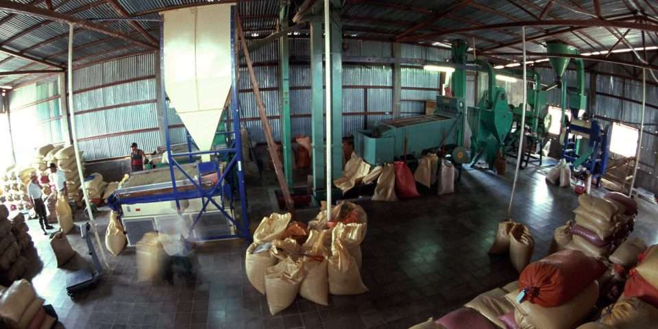 Dry mill green coffee